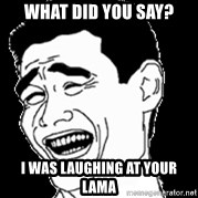 Laughing - what did you say? i was laughing at your lama