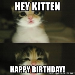 Adorable Kitten - hey kitten happy birthday!