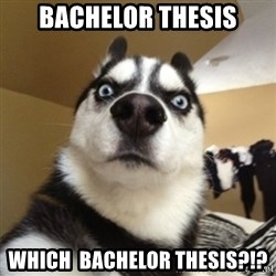Surprised Husky - Bachelor thesis which  bachelor thesis?!?