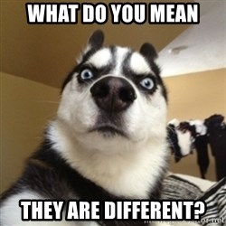 Surprised Husky - WHAT DO YOU MEAN THEY ARE DIFFERENT?