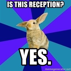 Reception Rabbit - is this reception? yes.