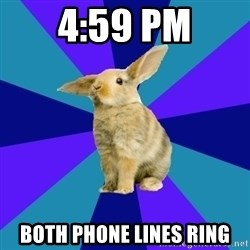Reception Rabbit - 4:59 pm Both Phone Lines ring