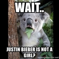 Koala can't believe it - Wait.. justin bieber is not a girl?