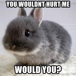 ADHD Bunny - you wouldnt hurt me would you?