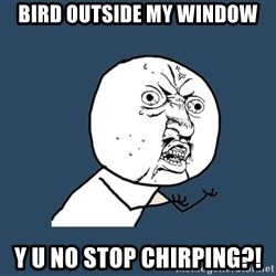 Y U No - bird outside my window y u no stop chirping?!