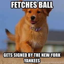Ridiculously Photogenic Puppy - fetches ball gets signed by the new york yankees