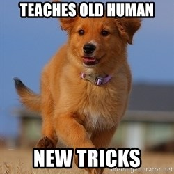 Ridiculously Photogenic Puppy - teaches old human new tricks