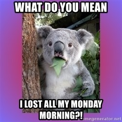 Koala Surprise - What do you mean I LOST all my monday morning?!
