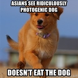 Ridiculously Photogenic Puppy - asians see ridiculously photogenic dog doesn't eat the dog