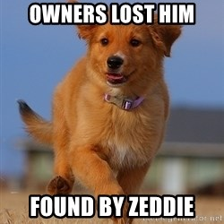 Ridiculously Photogenic Puppy - Owners lost him Found by zeddie