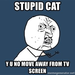 Y U No - stupid cat y u no move away from tv screen