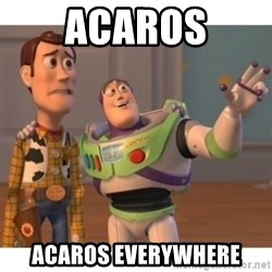 Toy story - acaros acaros everywhere