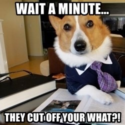 Dog Lawyer - wait a minute... they cut off your what?!