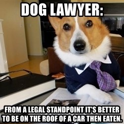 Dog Lawyer - Dog lawyer:  From a legal standpoint It's better to be on the roof of a car then eaten.