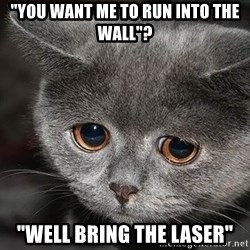 "Sadcat - ""you want me to run into the wall""? ""Well bring the laser"""