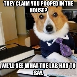 Dog Lawyer - THey claim you pooped in the house? We'll see what the lab has to say.