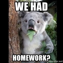 Koala can't believe it - we had homework?