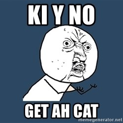 Y U No - ki y no  get ah cat