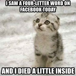 The Favre Kitten - I saw a four-letter word on facebook today and i died a little inside