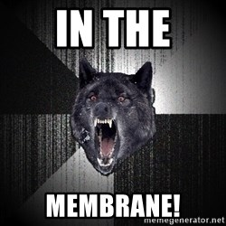 Insanity Wolf - in the membrane!
