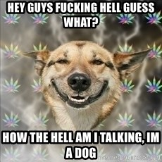 Original Stoner Dog - Hey guys fucking hell guess what? How the hell am i talking, im a dog