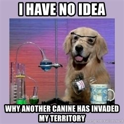 Dog Scientist - i have no idea WHY ANOTHER CANINE HAS INVADED MY TERRITORY