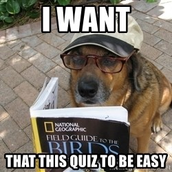 Dog Studying - i want that this quiz to be easy
