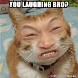 Chinacat - You laughing bro?