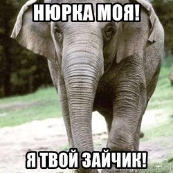 Eating Disordered Elephant  - Нюрка моя! Я твой зайчик!