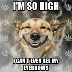 Stoner Dog - i'm so high i can't even see my eyebrows