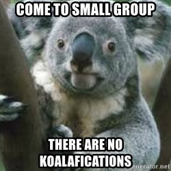 koalafications - Come to small group there are no koalafications