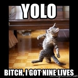 cat swag - YolO Bitch, I got nine lives