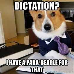 Dog Lawyer - Dictation? I have a para-beagle for that