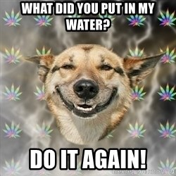 Stoner Dog - What did you put in my water? do it again!
