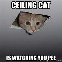 Ceiling cat - Ceiling cat is watching you pee