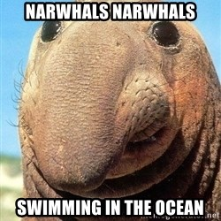 Lolwut - Narwhals Narwhals swimming in the ocean
