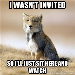 Disappointed Tibetan Fox - I WASN'T INVITED SO I'LL JUST SIT HERE AND WATCH