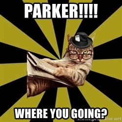 Frustrated Journalist Cat - Parker!!!! where you going?