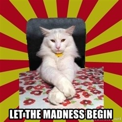 Dictator Cat - let the madness begin