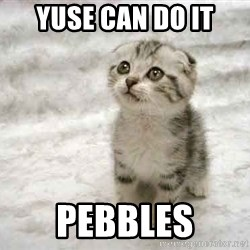 The Favre Kitten - yuse can do it pebbles