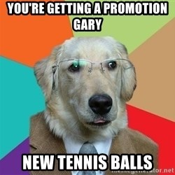 Business Dog - you're getting a promotion gary new tennis balls