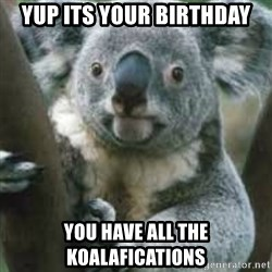 koalafications - Yup its your Birthday You have all the koalafications