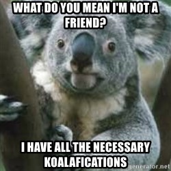 koalafications - What do you mean i'm not a friend? I have all the necessary koalafications