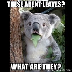 Koala can't believe it - these arent leaves? what are they?