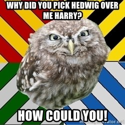 JEALOUS POTTEROMAN - why did you pick hedwig over me Harry? How could you!