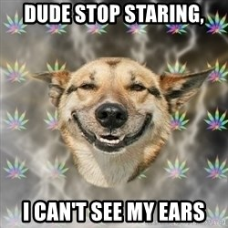 Stoner Dog - Dude stop staring, I can't see my ears
