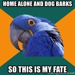 Paranoid Parrot - home alone and dog barks so this is my fate
