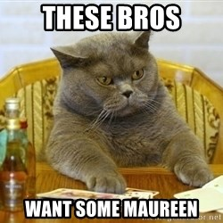 Poker Cat - these bros want some maureen