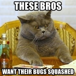 Poker Cat - these bros want their bugs squashed