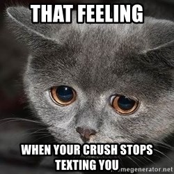 Sadcat - that feeling when your crush stops texting you